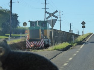 Sugarcane train