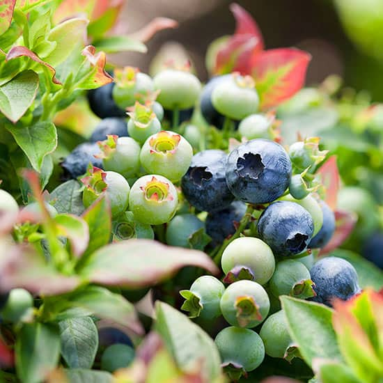 Delectable Super Foods To Grow In Your Colorado Garden