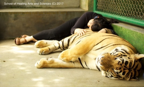 虎をもふる