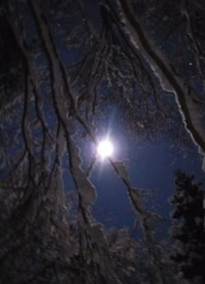 飛騨の森 夜