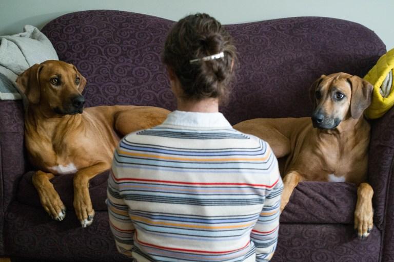 Rochelles Puppies