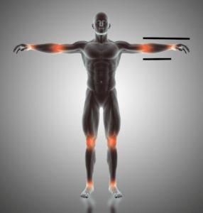 golden ratio, human body