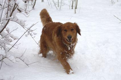 3 feb 10 Happy Freyia