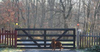 23 Nov 12 Belle at the gate