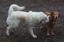 27 Nov 12 Goliath I remember you Bailey