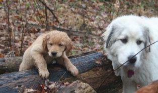 27 Nov 12 Jorgi and Goliath