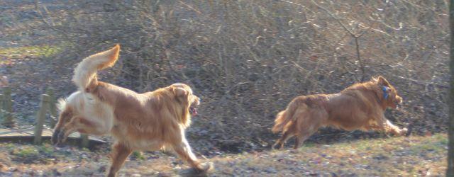 24 FEb 13 Titon chasing his buddy Rolo