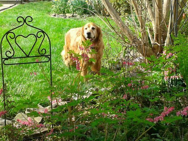 Thor 1 May 15 garden