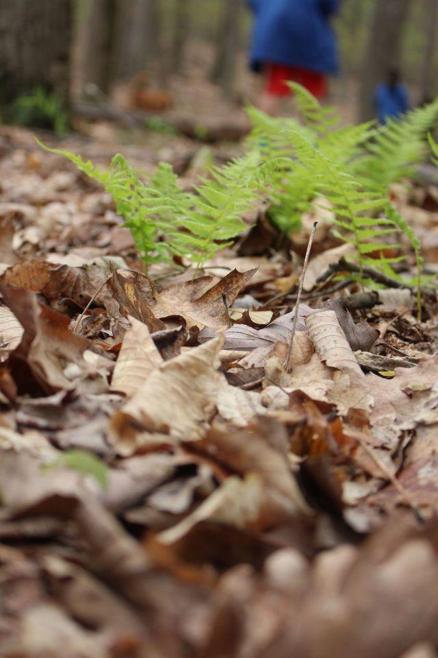 23 April 16 ferns
