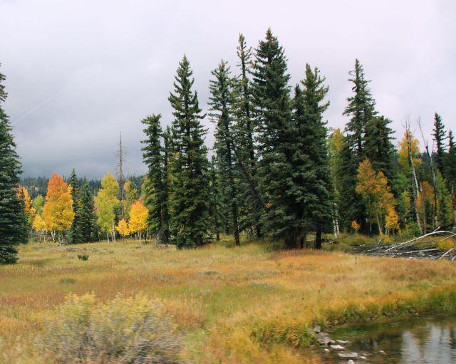 sept-2016-aspens-among-pines-5