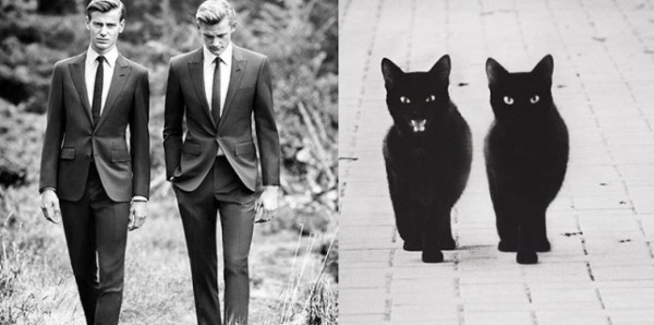 Cats Who Look Like Male Models