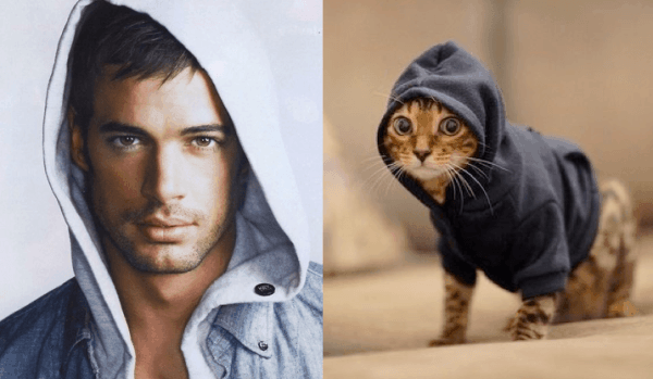 Cats Who Look Like Models