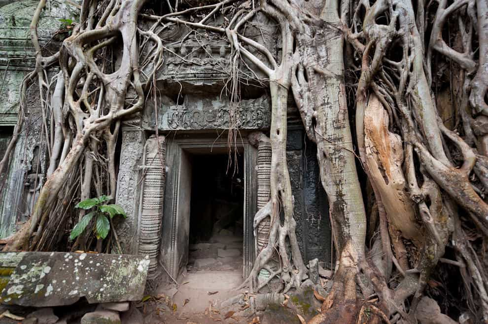 Forests reclaim the mysterious Angkor temple of Ta Prohm