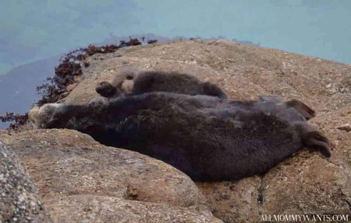 Monterey Bay Otter Baby