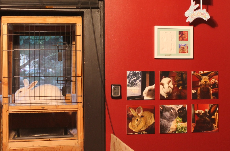 MIXPIX Photo Tiles on the wall next to the bunny hutch