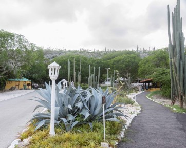 Cactus Gardens at the entrance of the Hato Caves located on the north side of Curaçao island near Willemstad. Photo Credit: Wendy Nordvik-Carr©