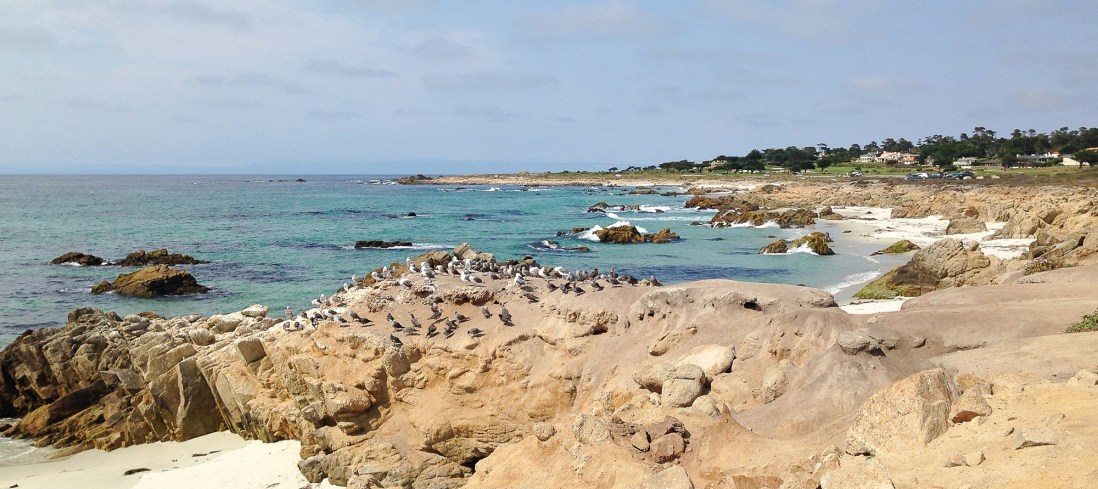 Highway 101 from San Francisco to Carmel by the Sea - Top Things to do in Califronia Photo Credit: Wendy Nordvik-Carr