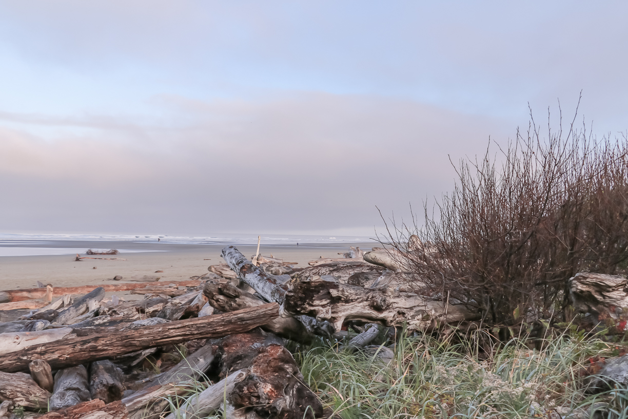 Explore endless beaches when you travel to Olympic National Park to discover a wild, vast wilderness of nature at its best. This is one of the top 10 things to do in Olympic National Park Photo credit: Wendy Nordvik-Carr©