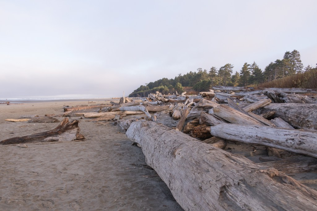 Top things to do at Kalaloch and Ruby Beach, Olympic National Park