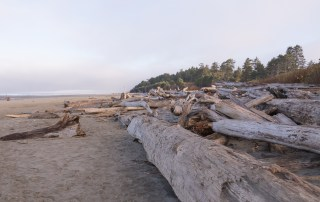 Driftwood lines the Kalaloch Beach - Top things to do in Olympic National Park