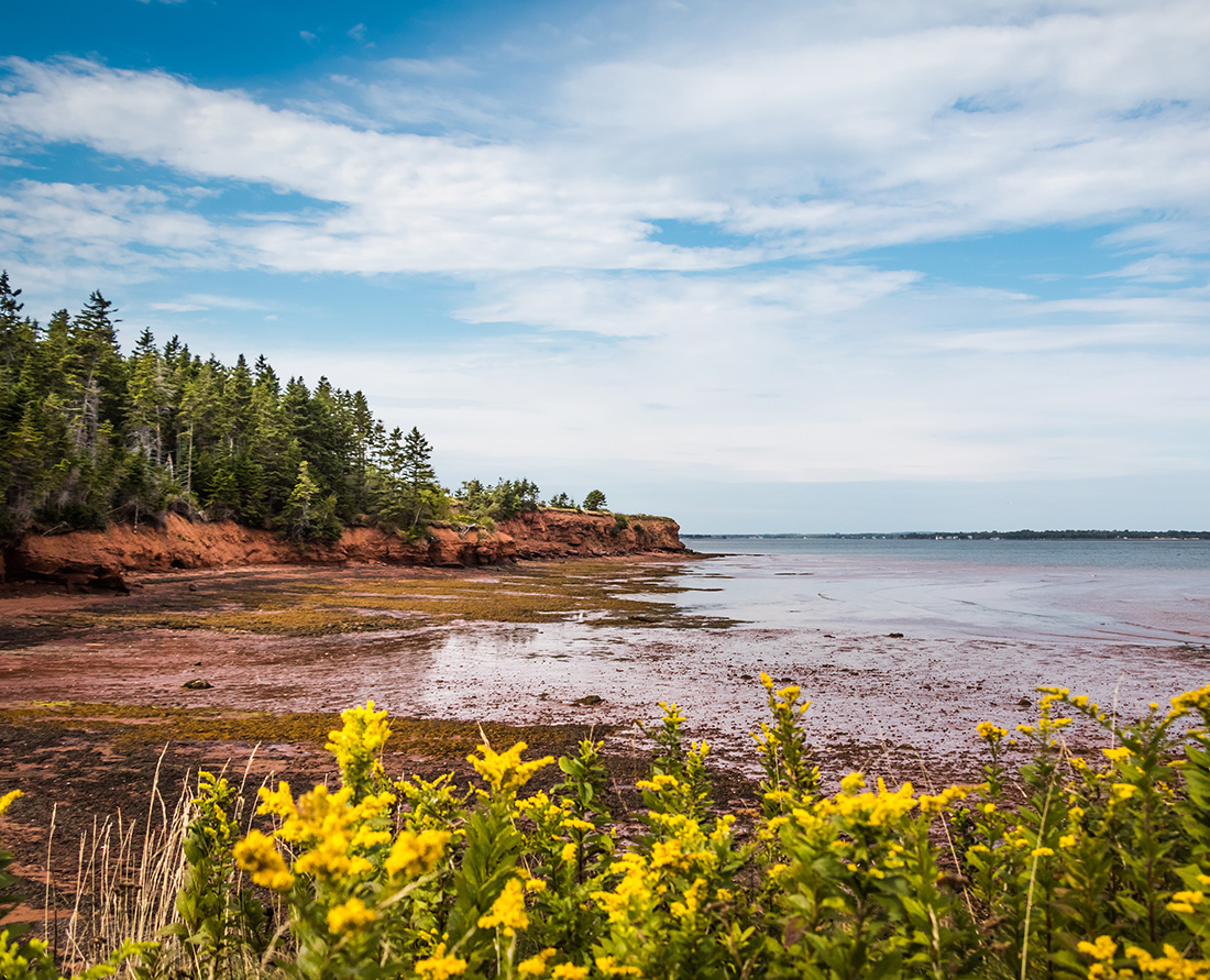 Prince Edward Island's scenic Red Sands Shore drive takes you on red clay roads winding through the countryside of farmlands, rolling hills and woodlands and then onto impressive red sandstone cliffs and red sand beaches. Irish Moss can be found here. Photo Credit: Wendy Nordvik-Carr