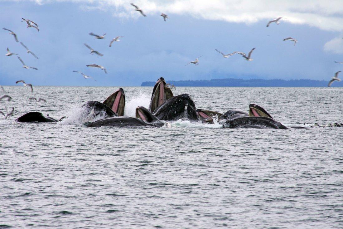 Discover Juneau Alaska