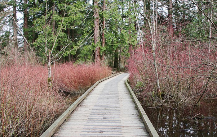 Come explore walking trails of Campbell Valley Regional Park in Metro Vancouver. Take a walk in the marshy woodlands. picnic and discover a heritage farmstead. Photo Credit: Wendy Nordvik-Carr