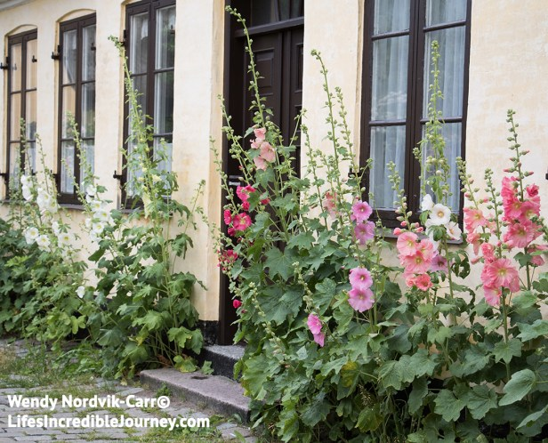 Beautiful hollyhocks line the cobblestone streets of Old Town Dragør. Photo Credit: Wendy Nordvik-Carr©