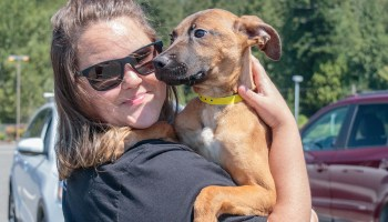Puppy rescue delivers bundles of love to adoptive families. Photo Credit: Wendy Nordvik-Carr©