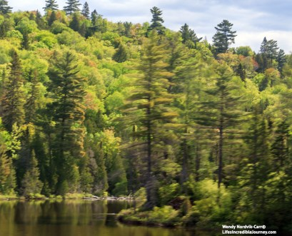 Slightly distored imagery as viewed from the moving Agawa Canyon train. Discover the inspiration of Sault Ste Marie through the eyes of Canada's famous Group of Seven artists. Photo Credit: Wendy Nordvik-Carr©
