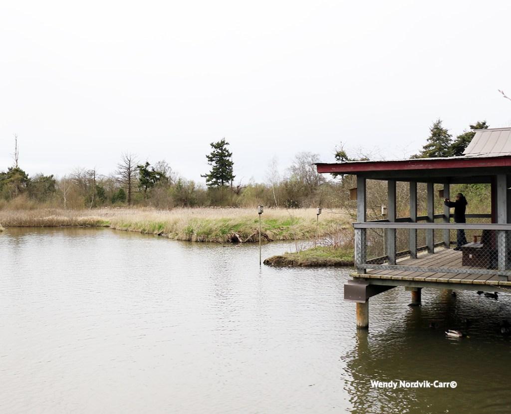 Viewing platform at the Reifel Bird Sanctuary Photo Credit: Wendy Nordvik-Carr©