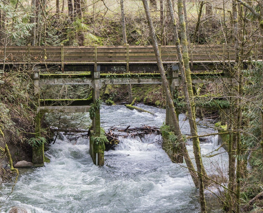 A wooden bridge at Whatcom Falls Park: Photo Credit: Wendy Nordvik-Carr©