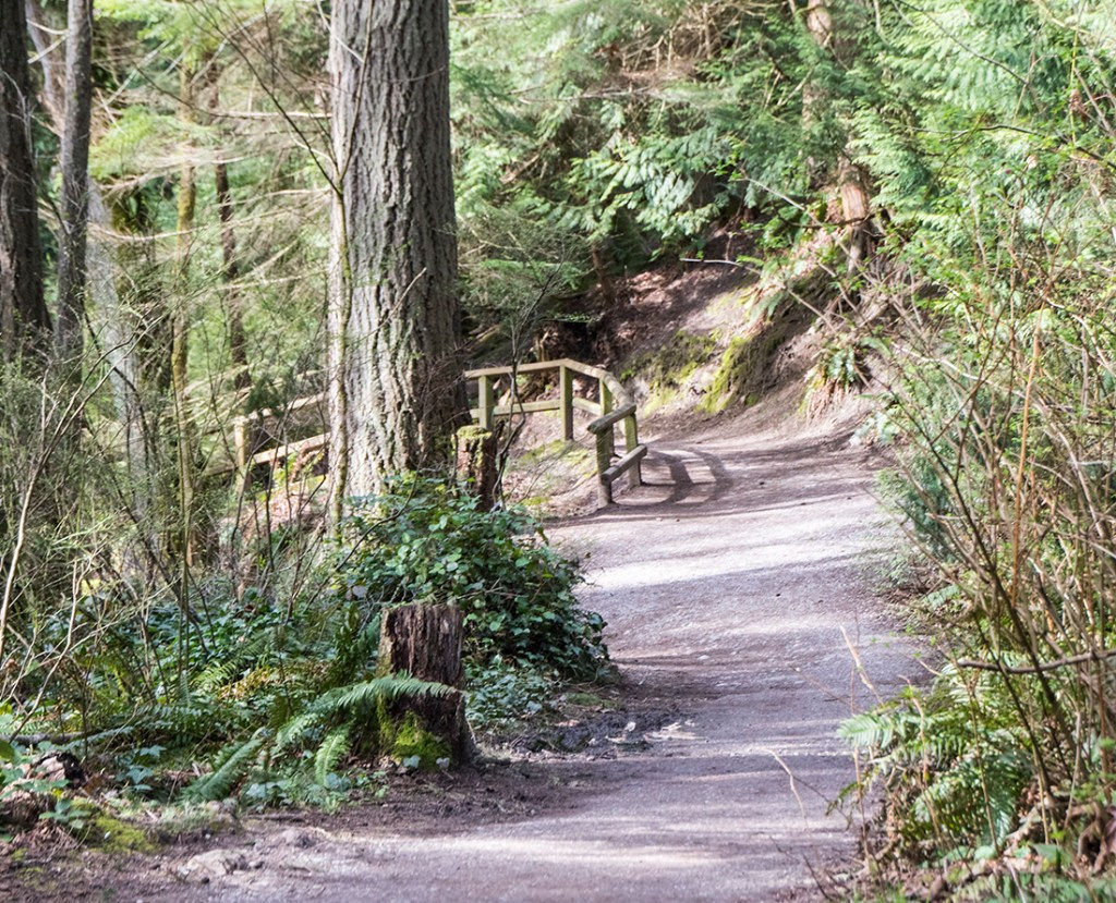 Discover the scenic trails of Whatcom Falls park. Photo Credit: Wendy Nordvik-Carr©