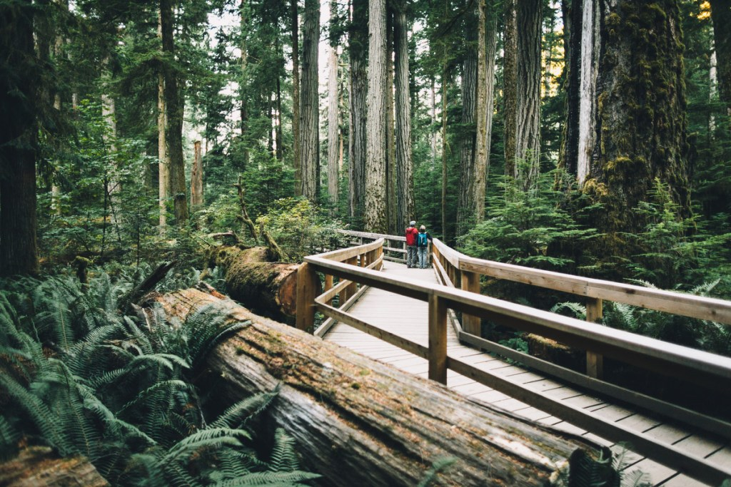 Top things to do on Vancouver Island Cathedral Grove Trails. Photo Credit: Destination BC/Graeme Owsianski