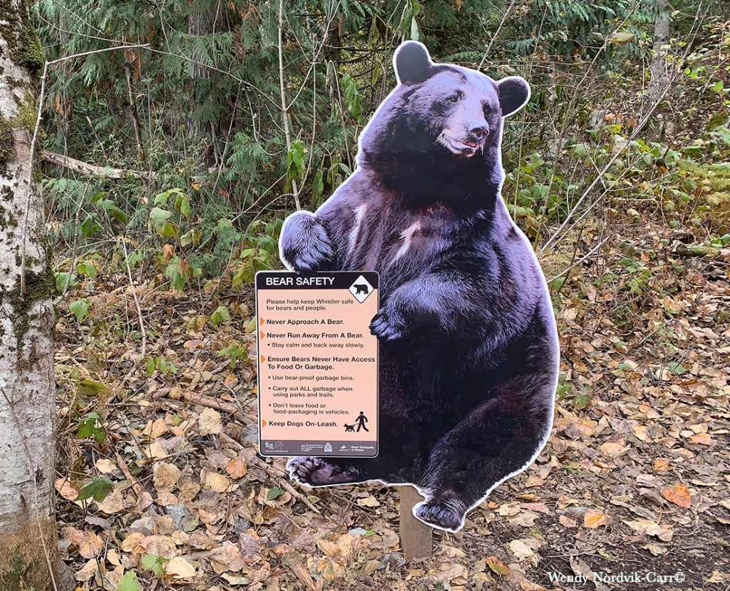 Bear Safety tips for travelling in B.C. Photo Credit: Wendy Nordvik-Carr©