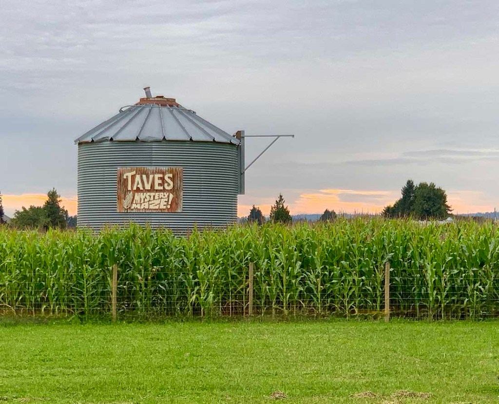 Sunset behind the new Mystery Maze at Taves Family Farms. Photo: Wendy Nordvik-Carr©