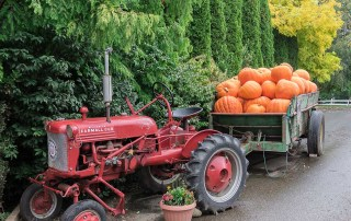 Celebrate fall harvest on Taves Family Farms