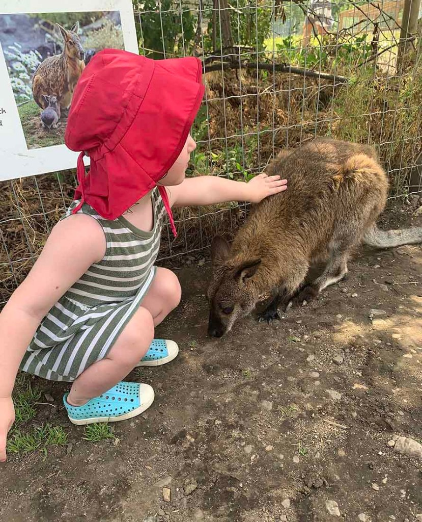 One of the top family adventure in BC is a visit to the Kangaroo Creek Farm Photo: Melanie Lomond©