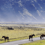 Horses graze in Chile's pastures