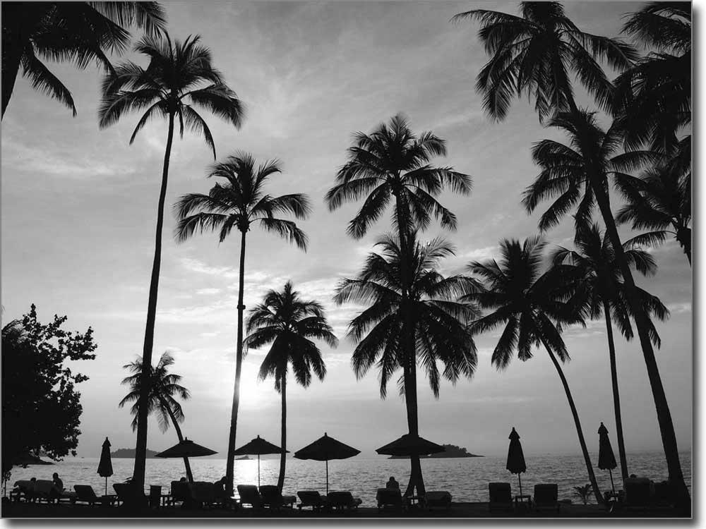 Paradies unter Palmen  selbstklebende Fensterfolie