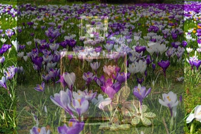 Frühling Falkon Blumenwiese