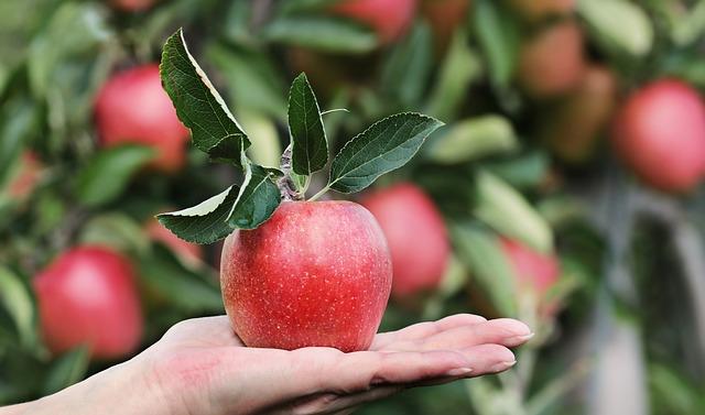 【リンゴ酢の飲み方】リンゴ酢の5つの効果と飲むタイミングと摂取量