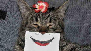 Gambar Kucing Lucu Viral di Internet