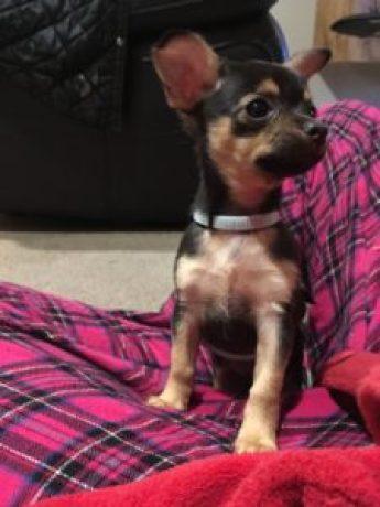 seizure alert dog British Columbia canada ESA Therapy dog