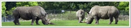 Rhino Lifestyle C / Leefstyl C