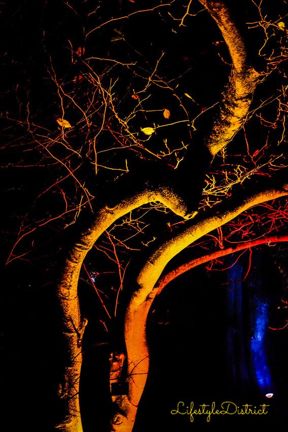 Lifestyle District | Bristol culture & photography blog: Enchanted Xmas CoWheels &emdash; DSC_5164