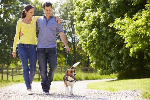 Couple Walk Dog