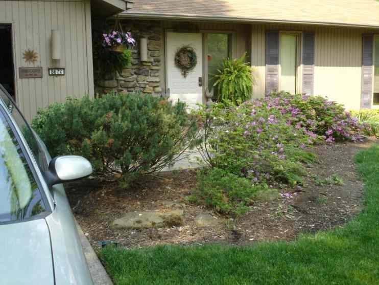 BEFORE: cramped entry walk, overgrown shrubs.