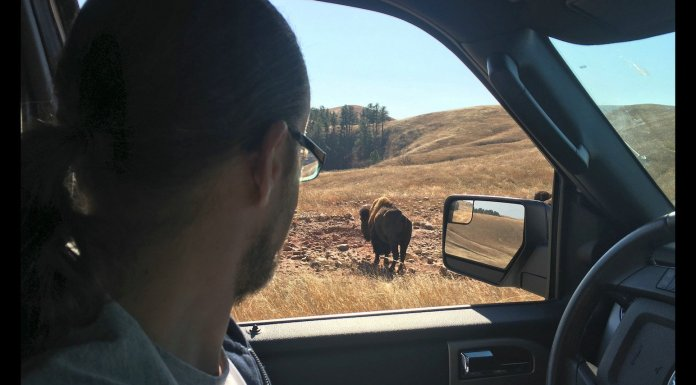 USA Road Trip Quer Etappen Wyoming Buffalo