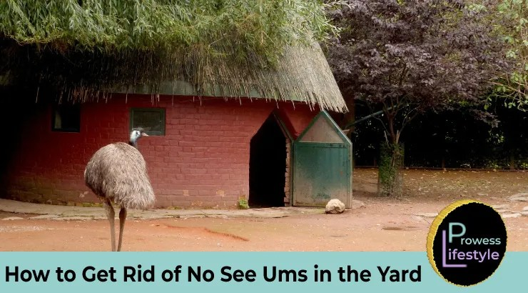 How-to-Get-Rid-of-No-See-Ums-in-the-Yard
